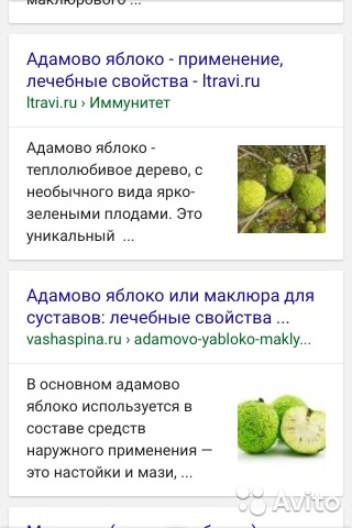 Адамово яблоко лечебные свойства рецепты фото