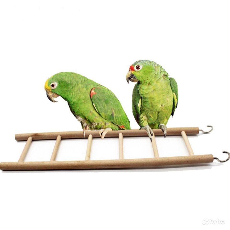 Деревянная лестница грызунам птицам