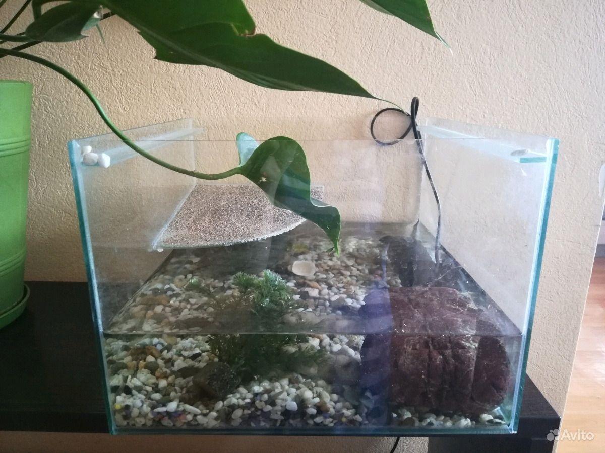 Черепаха с аквариумом в Новосибирске - фотография № 3