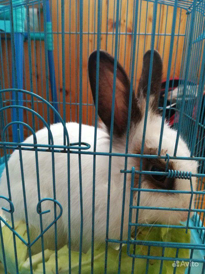 Декаритивный кролик, 4 месяца