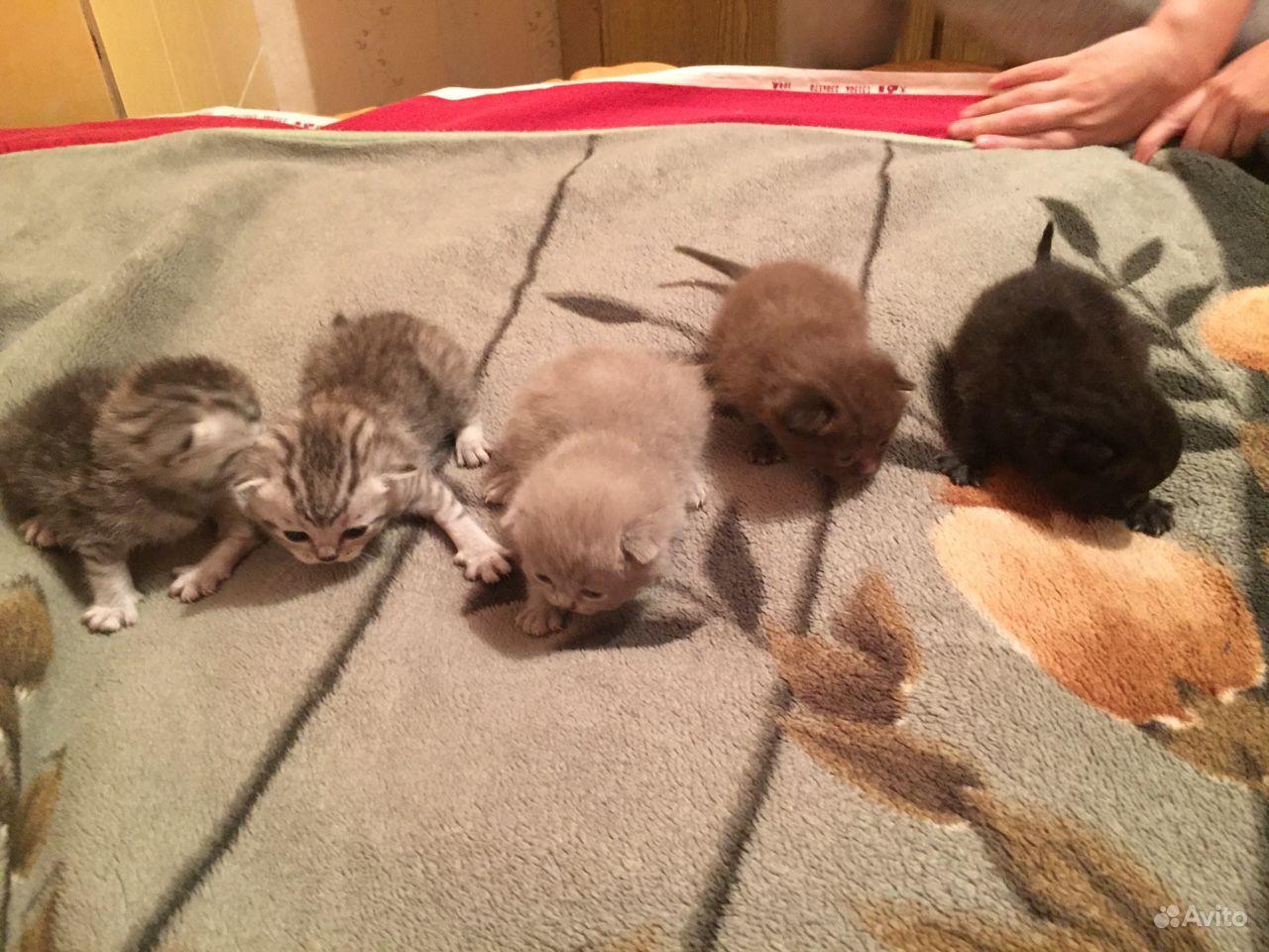 картинки котят три недели сборе состоит