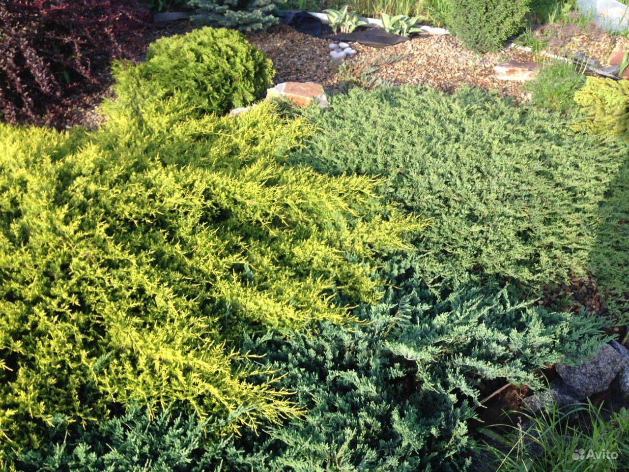 Продам растения купить на Зозу.ру - фотография № 4
