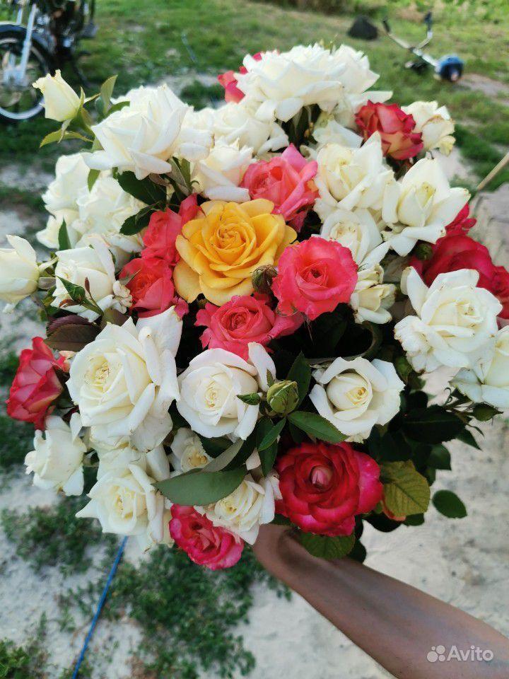 Розы на срезку. Букеты купить на Зозу.ру - фотография № 4