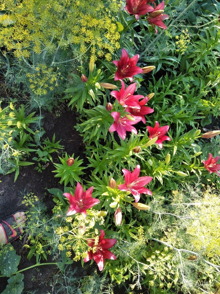 Цветы купить на Зозу.ру - фотография № 2
