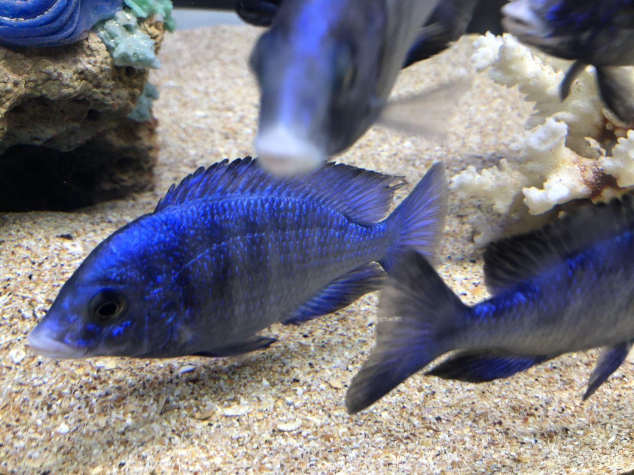 Рыба дельфин белогубый купить на Зозу.ру - фотография № 3