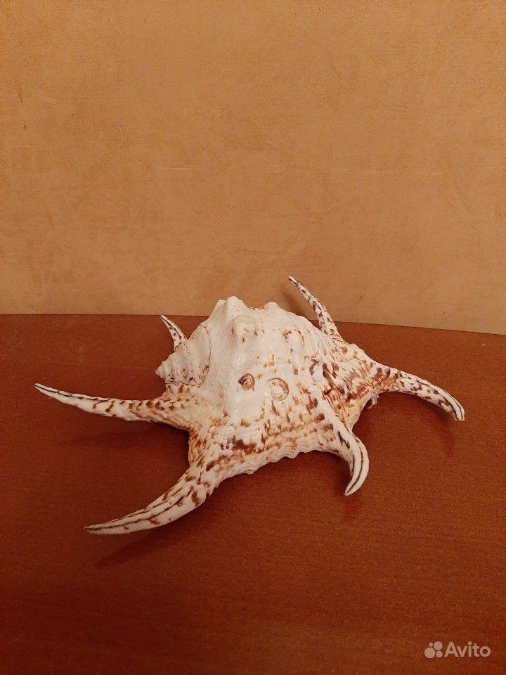 Ракушка (раковина) морская купить на Зозу.ру - фотография № 1