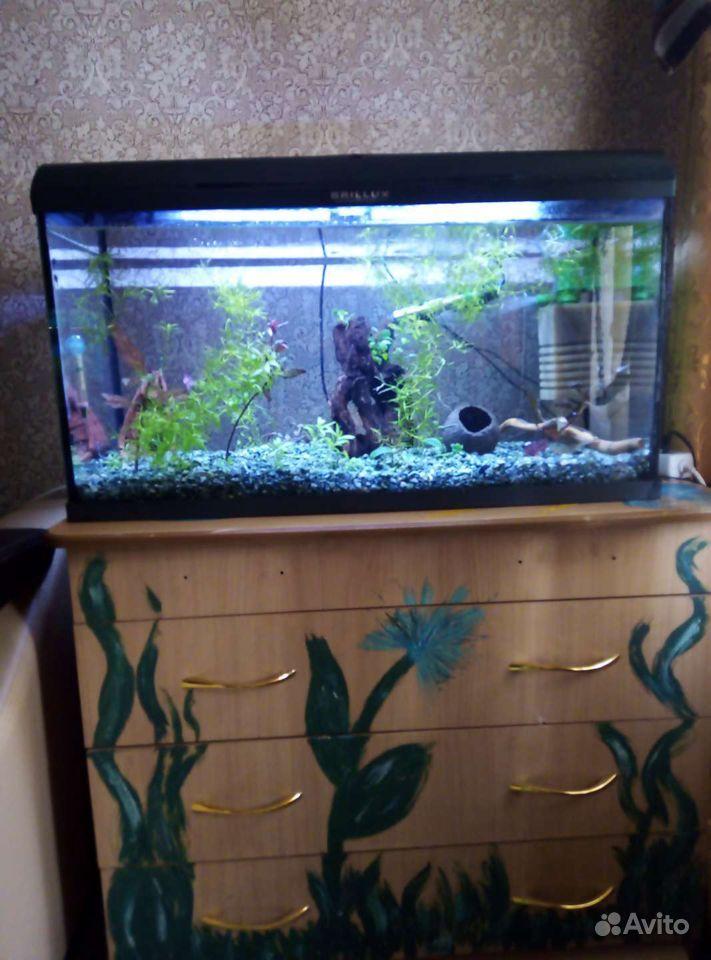 3 аквариума купить на Зозу.ру - фотография № 3