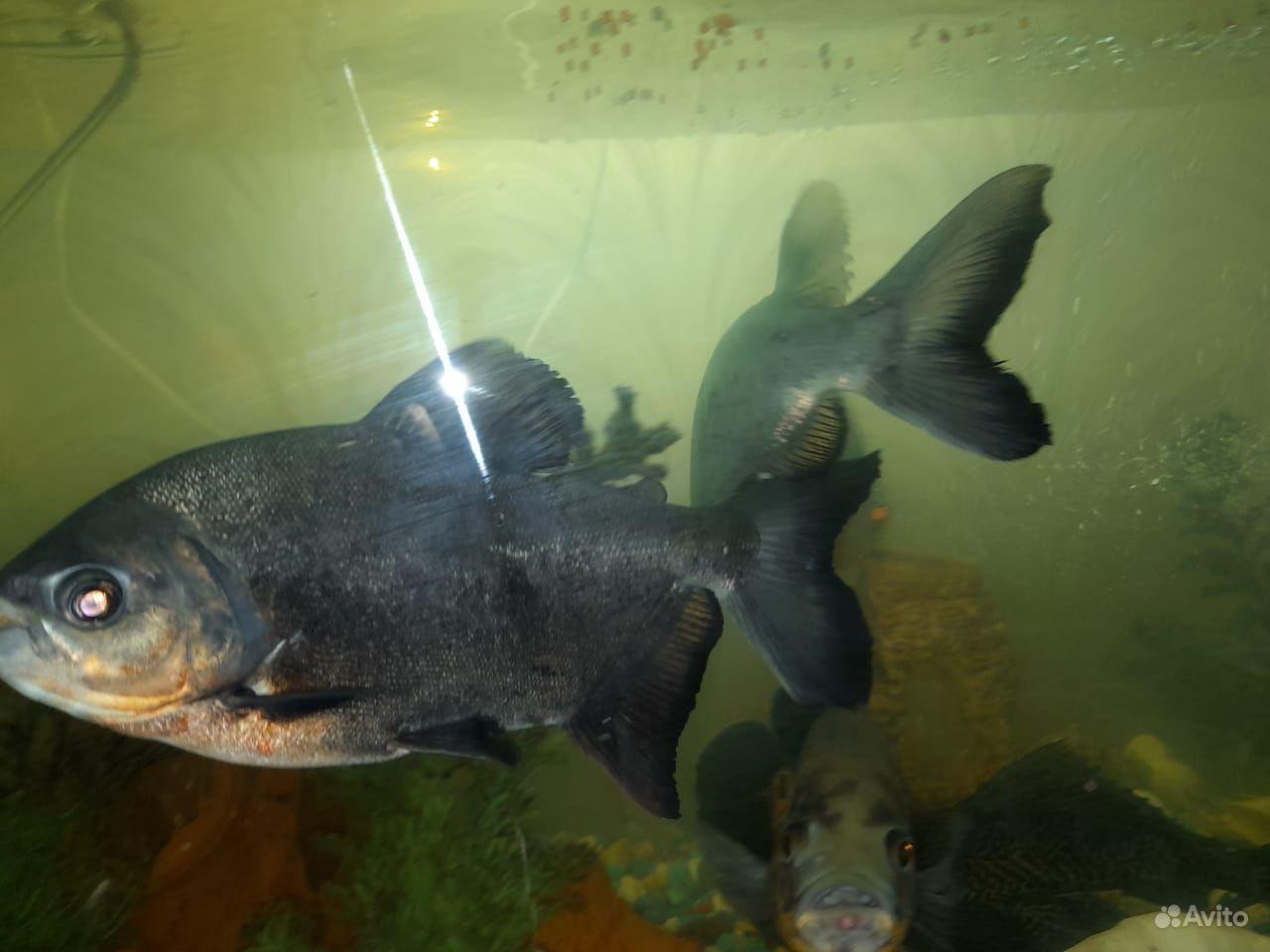 Рыбы с аквариумом и всеми удобствами для них купить на Зозу.ру - фотография № 3