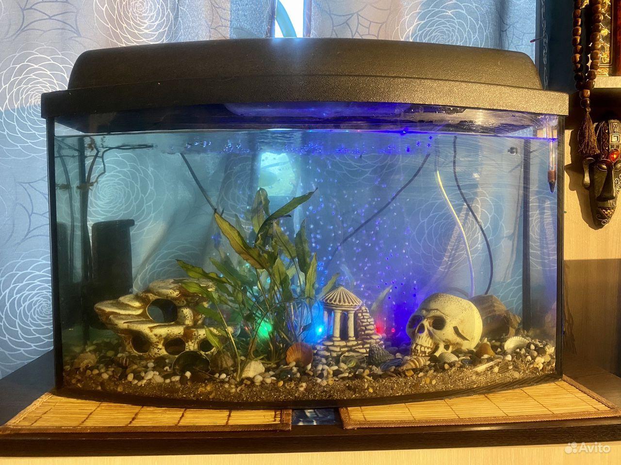 Аквариум с рыбками купить на Зозу.ру - фотография № 1