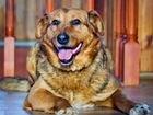 Самый верный и преданный пес- Друг - в дар