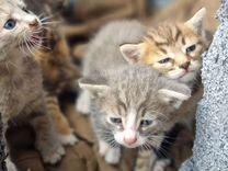 Кошки в добрые руки бесплатно