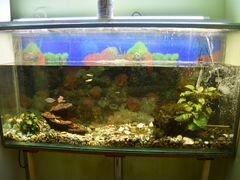 Продам аквариум на 250 литров c рыбками