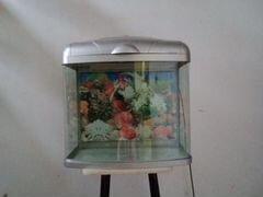 Террариум или аквариум