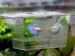 Отсадник для рыб