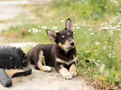 Домовитый щенок Добби в добрые руки