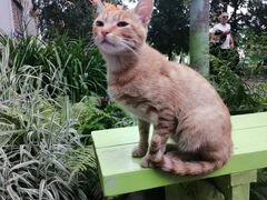 Ласковый котик ищет самых добрых хозяев