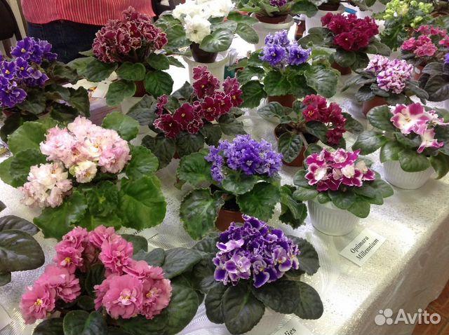 Кемерово купить комнатные цветы