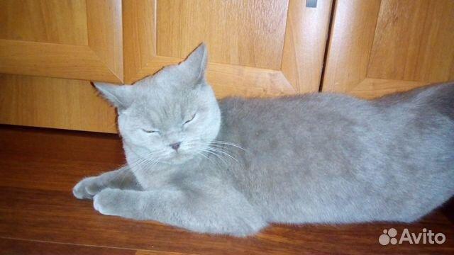 Кота на вязку челябинск