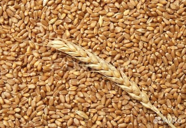 Объявления куплю продам семечку зерно по белгородской обл продажа бизнеса томск