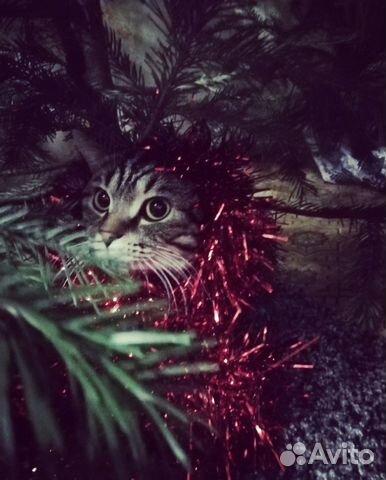 Кот ищет кошечку 89836055840 купить 3
