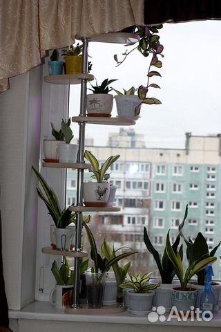 Полки для цветов - фото множества идей для особых стеллажей   480x320