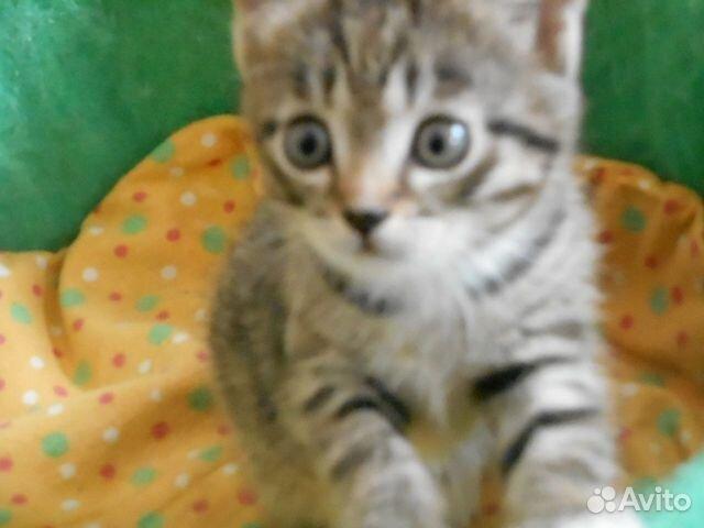 Отдам котят 89230078502 купить 4