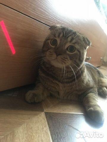 Ищем кошек для вязки купить 3