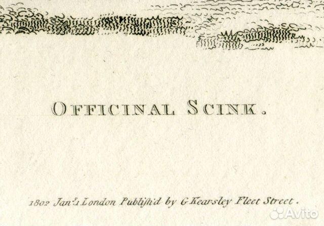 Старинная гравюра 1802 г амфибии сцинк антиквариат  купить 3