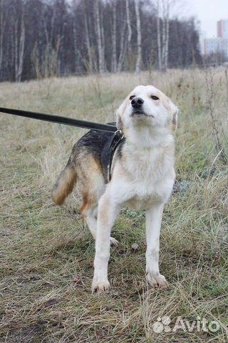 Отдам щенка девочку купить на Зозу.ру - фотография № 3