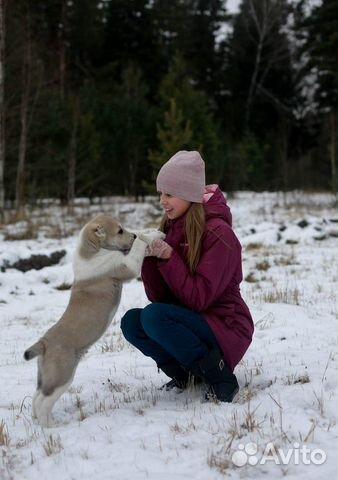 Среднеазиатская овчарка купить на Зозу.ру - фотография № 6