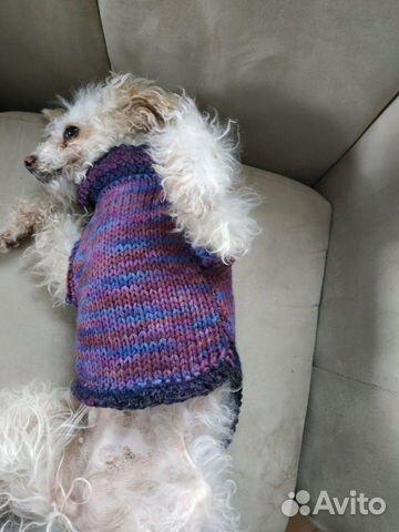 Свитер для собаки 89963896062 купить 6