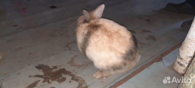 Крольчиха кролик