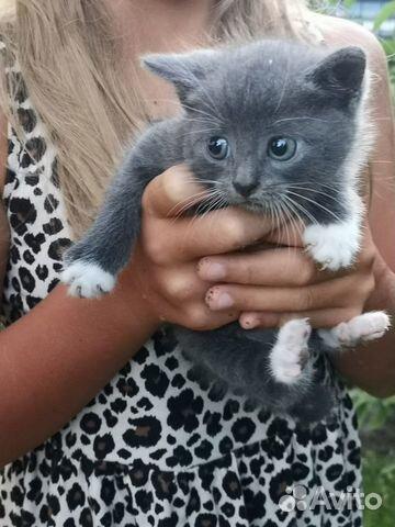 Отдам в добрые руки котенка  89118523542 купить 1