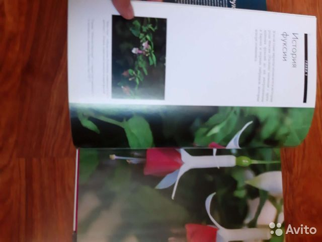 Энциклопедия цветов Фуксии  89044003557 купить 2