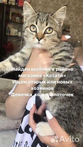 Котенок  89149037666 купить 1