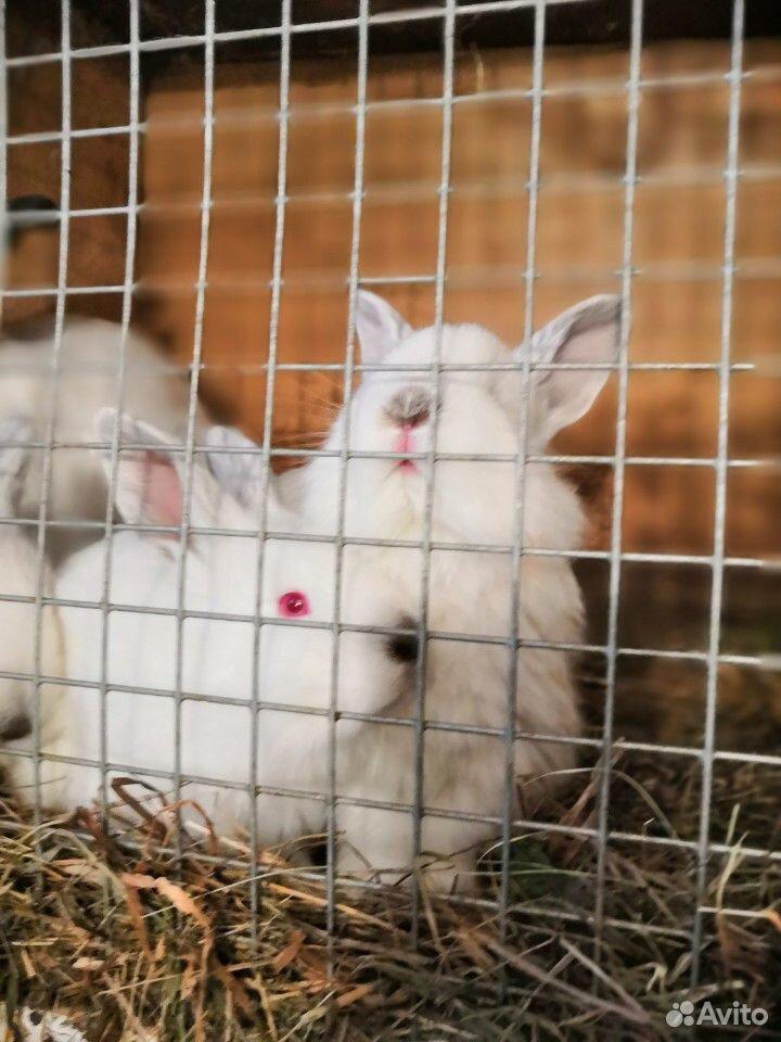 Кролики  89202931862 купить 2