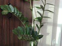 Крупные комнатные (офисные) растения