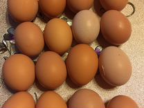 Яйцо куриное, перепелиное
