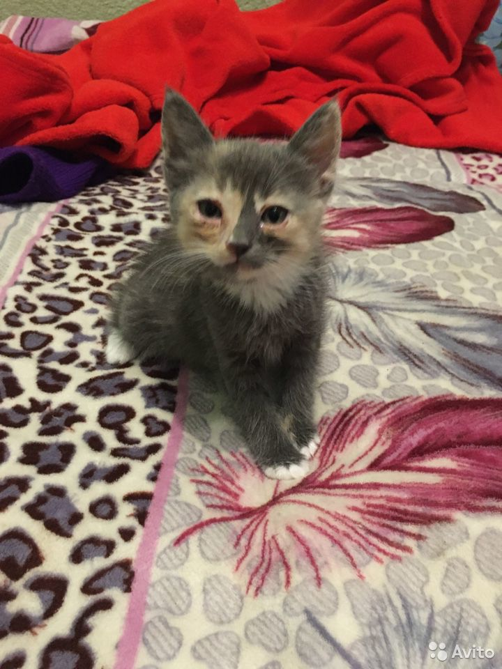 Kittens in good hands for free  89788541933 buy 1