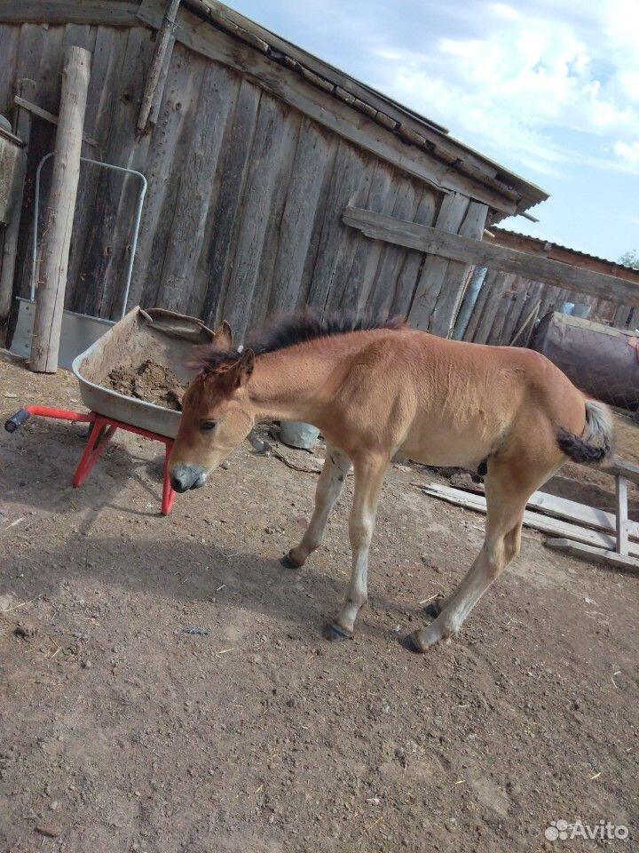 Лошадь с жеребенком  89053862728 купить 8