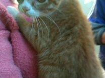 Соня 4 мес стерилизована в добрые руки — Кошки в Геленджике