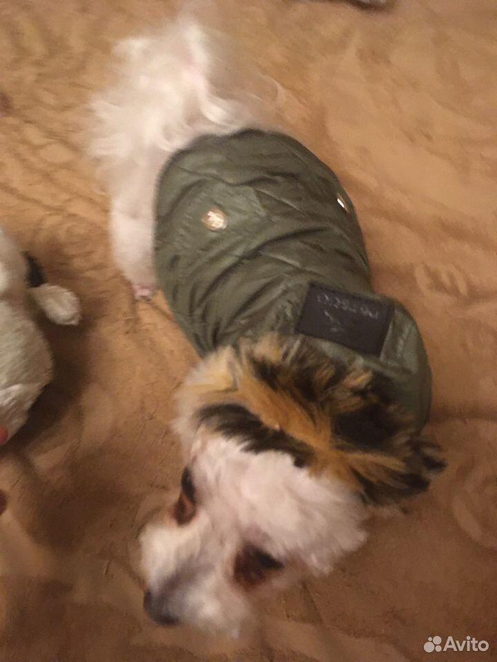 Куртка для собаки petsoo  89191738672 купить 6