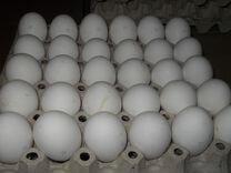Яйцо окское деревенское