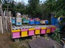 Пчелы — Другие животные в Великовечном