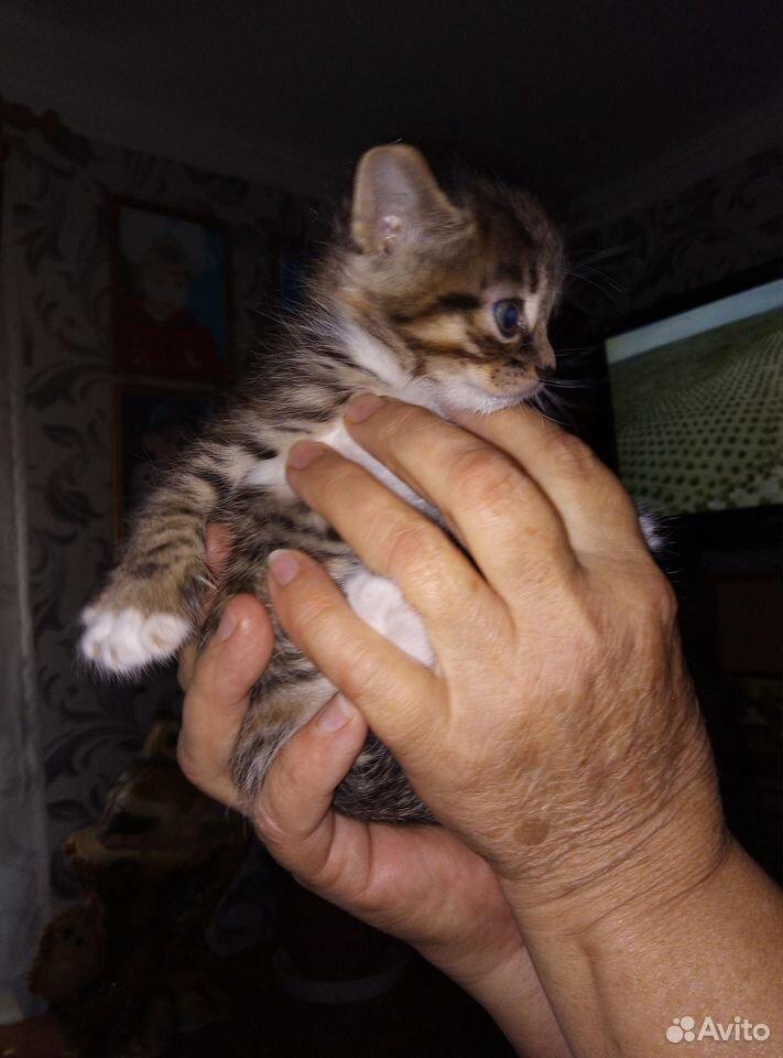 Котята в добрые руки  89040949333 купить 4