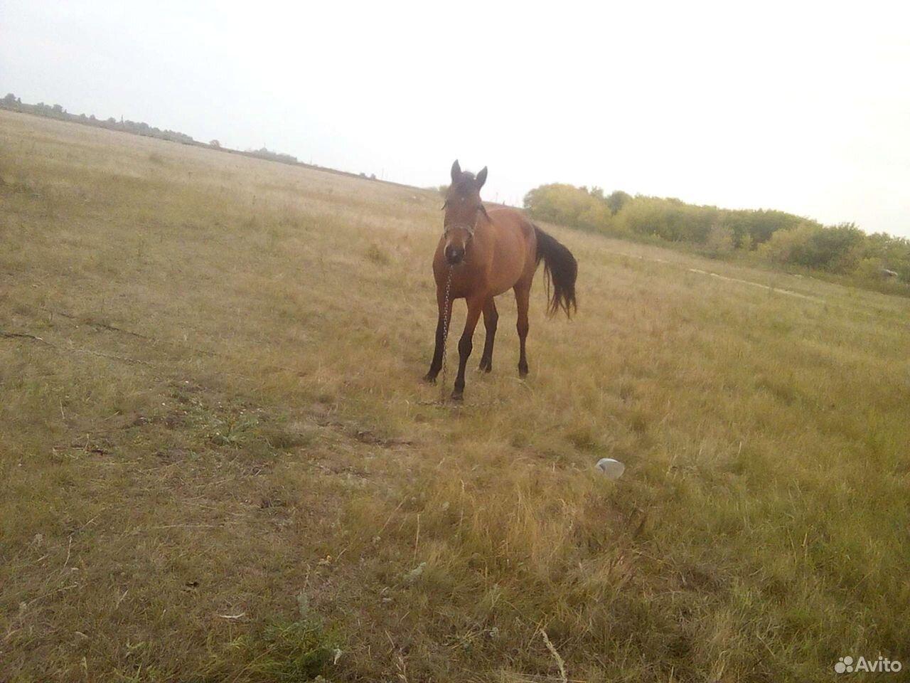 Лошадь жеребушка  89502100369 купить 3