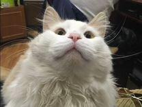 Пропал кот В пятигорске