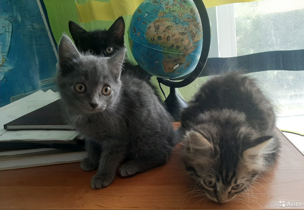 Отдам котят  89233221407 купить 1
