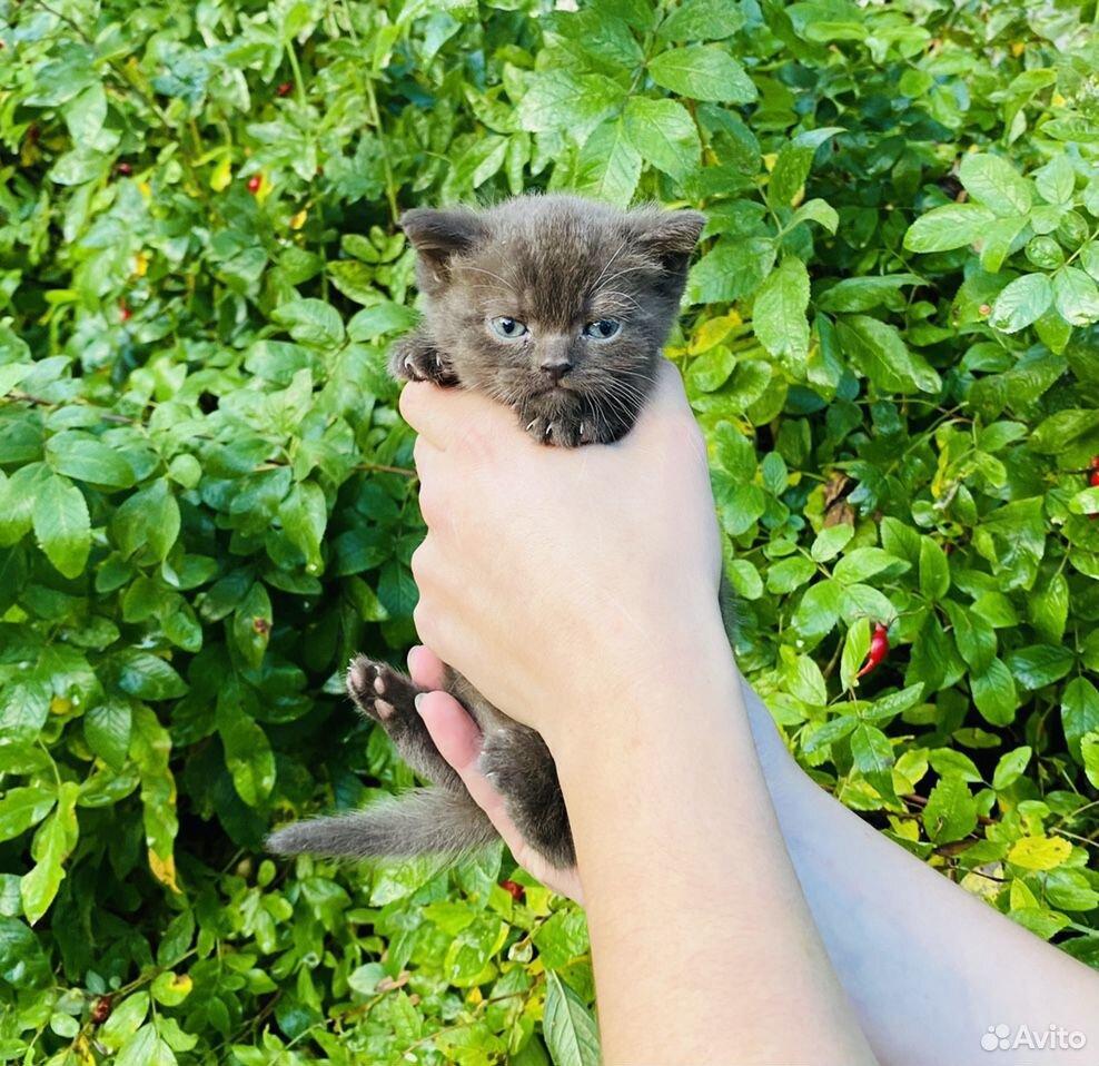 Кошечки и котики  89807082745 купить 3