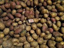 Едовой картофель
